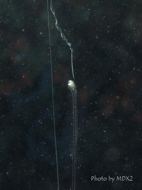 昼間から浮遊系_c0211615_19105791.jpg