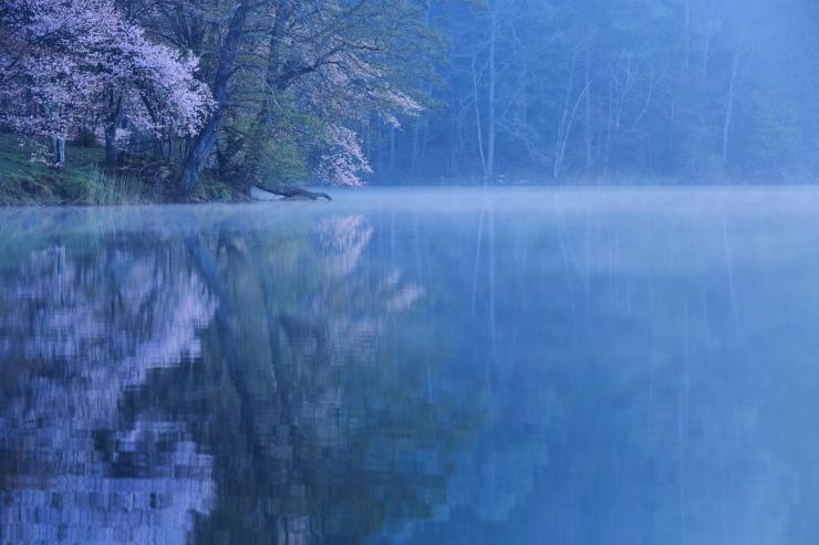 桜・響く 2019~中綱湖オオヤマザクラ~_d0349418_17364652.jpg