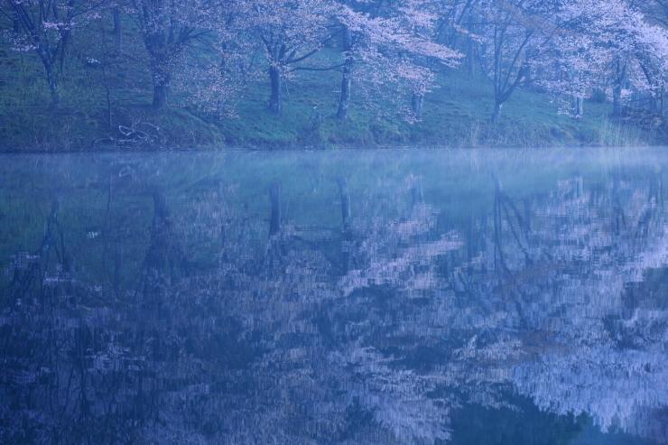 桜・響く 2019~中綱湖オオヤマザクラ~_d0349418_17372080.jpg