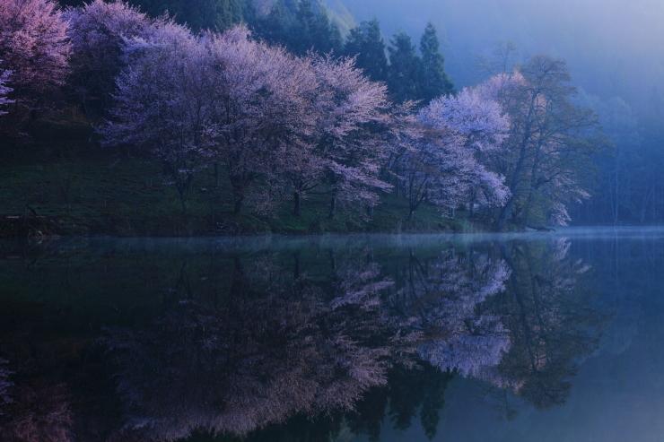 桜・響く 2019~中綱湖オオヤマザクラ~_d0349418_17374665.jpg