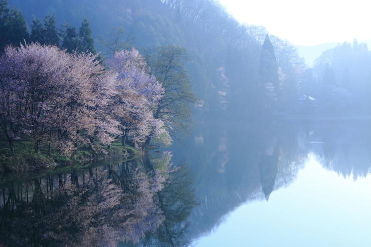 桜・響く 2019~中綱湖オオヤマザクラ~_d0349418_17393814.jpg