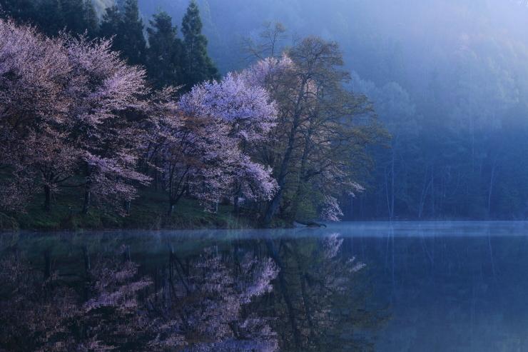 桜・響く 2019~中綱湖オオヤマザクラ~_d0349418_18144988.jpg