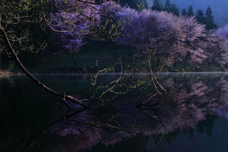 桜・響く 2019~中綱湖オオヤマザクラ~_d0349418_18430331.jpg