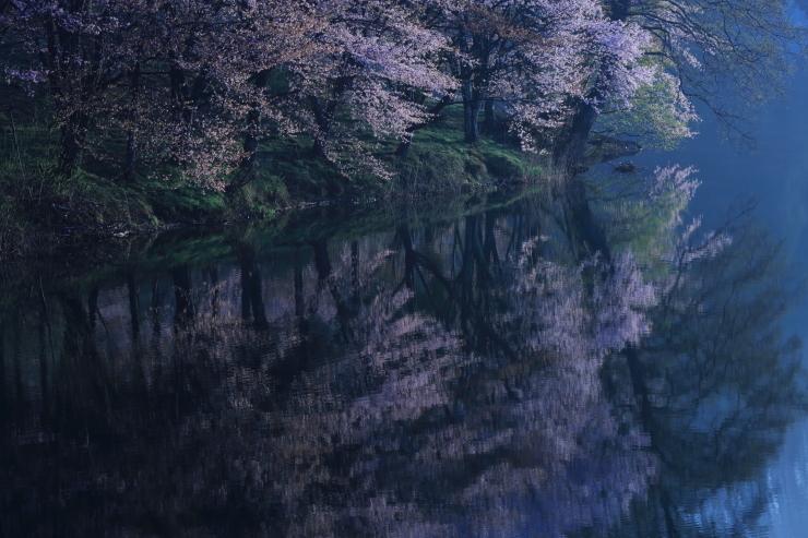 桜・響く 2019~中綱湖オオヤマザクラ~_d0349418_18551415.jpg