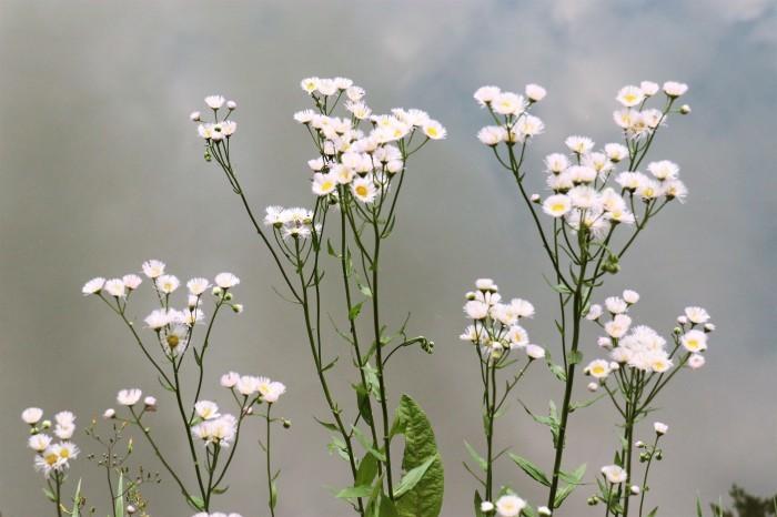 小さな花を撮る_d0150720_18512567.jpg