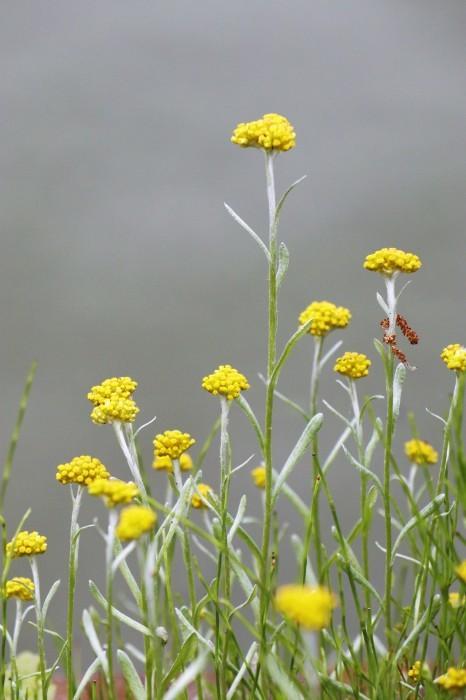 小さな花を撮る_d0150720_18514270.jpg