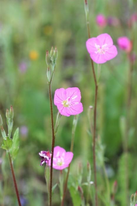 小さな花を撮る_d0150720_18523277.jpg