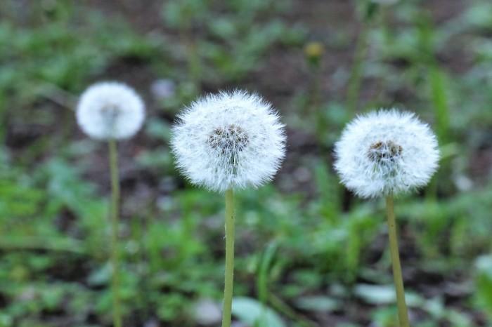 小さな花を撮る_d0150720_18525443.jpg