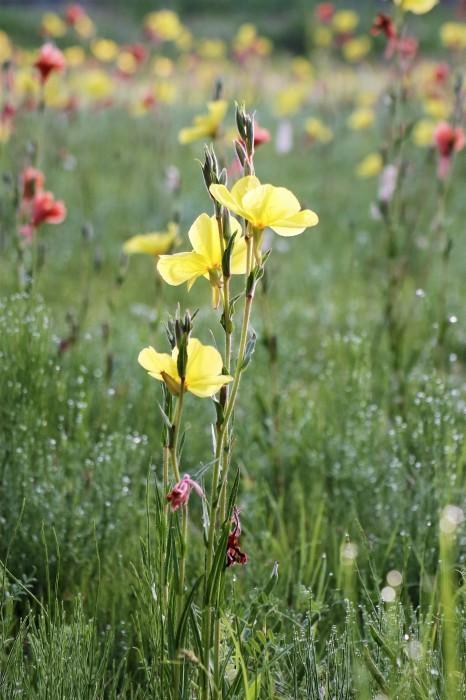 小さな花を撮る_d0150720_18541994.jpg