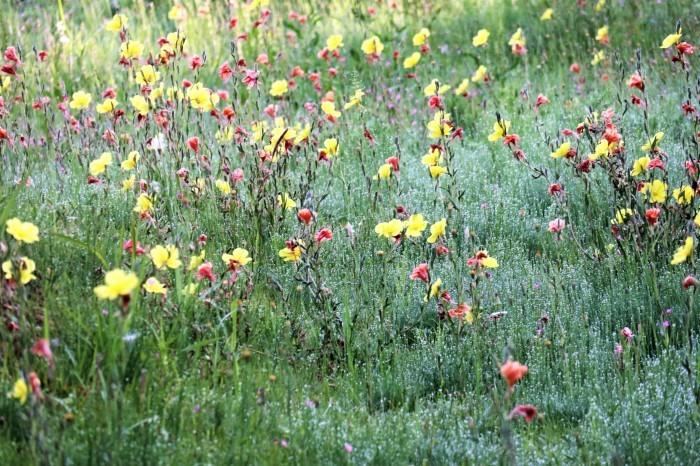 小さな花を撮る_d0150720_18544093.jpg