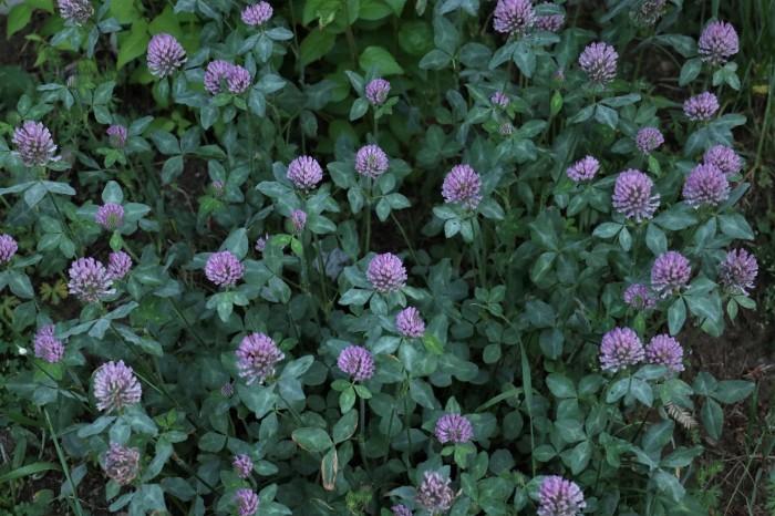 小さな花を撮る_d0150720_18550310.jpg
