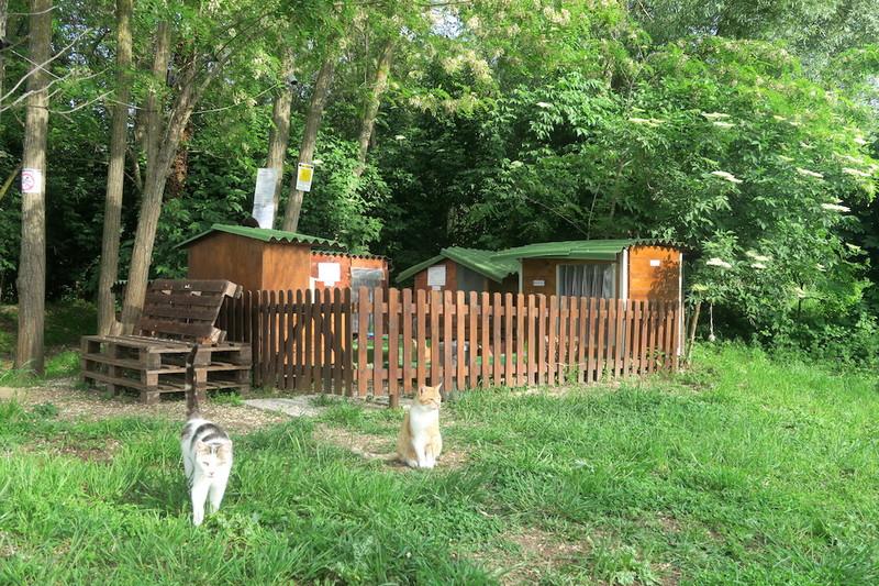 猫と白鳥とトラジメーノ湖_f0234936_7321589.jpg