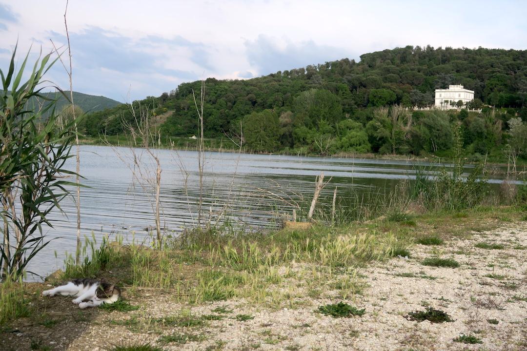 猫と白鳥とトラジメーノ湖_f0234936_7454880.jpg