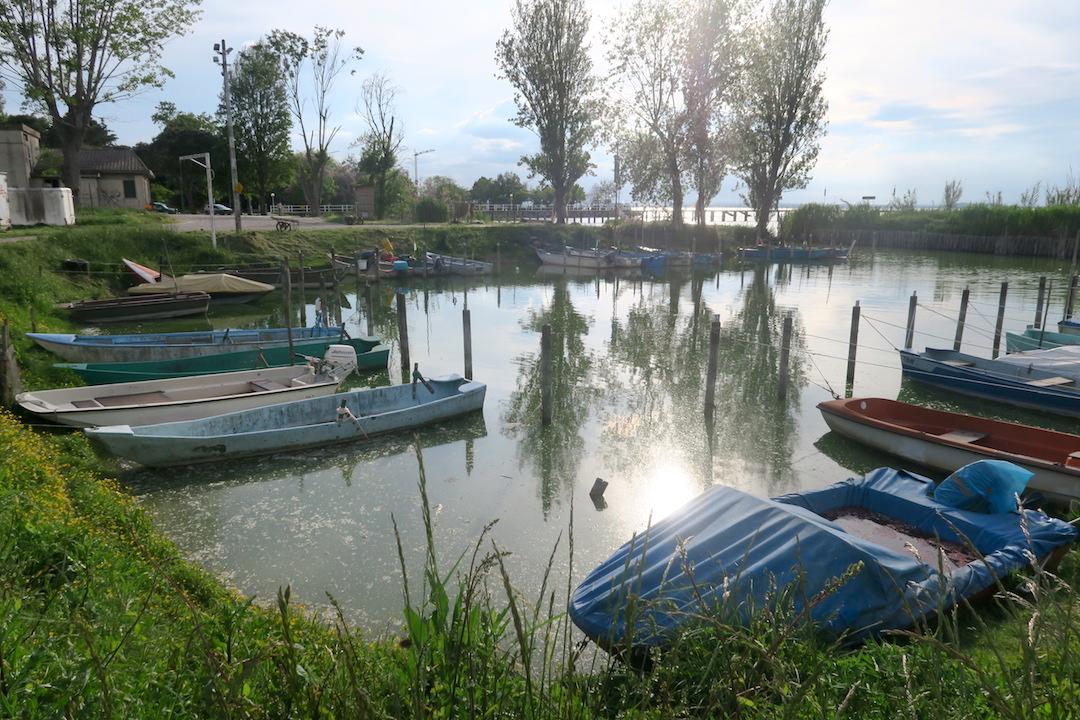 猫と白鳥とトラジメーノ湖_f0234936_7535318.jpg