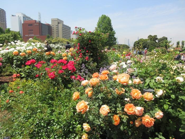 【モントレ横浜にランチに行ったら目の前でトライアスロンをやっていた】_b0009849_2139059.jpg