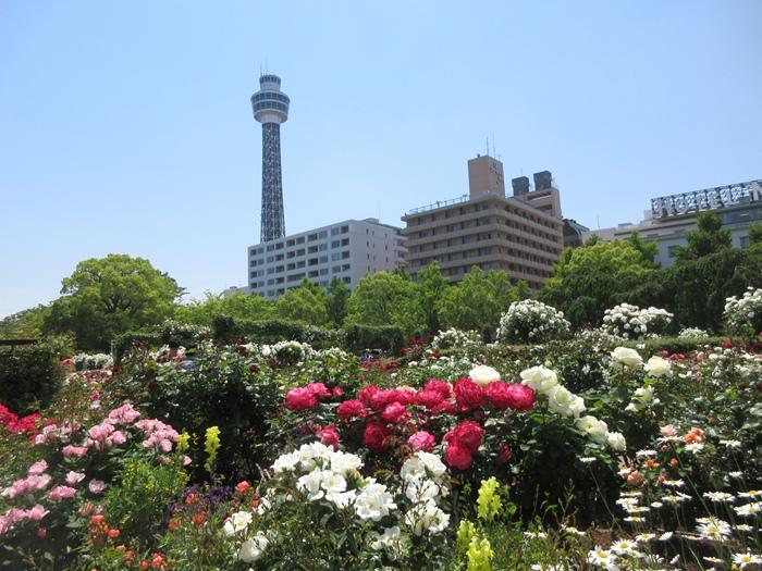 【モントレ横浜にランチに行ったら目の前でトライアスロンをやっていた】_b0009849_21412351.jpg