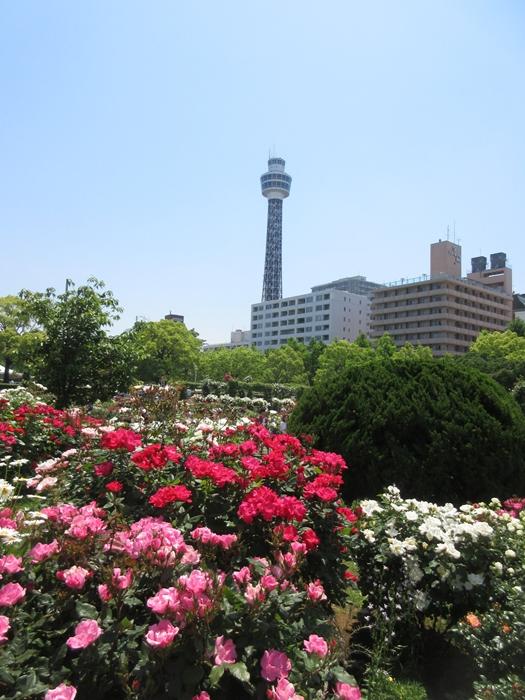 【モントレ横浜にランチに行ったら目の前でトライアスロンをやっていた】_b0009849_21415022.jpg