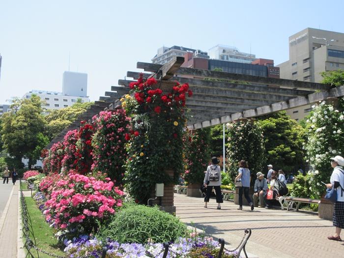 【モントレ横浜にランチに行ったら目の前でトライアスロンをやっていた】_b0009849_21423766.jpg