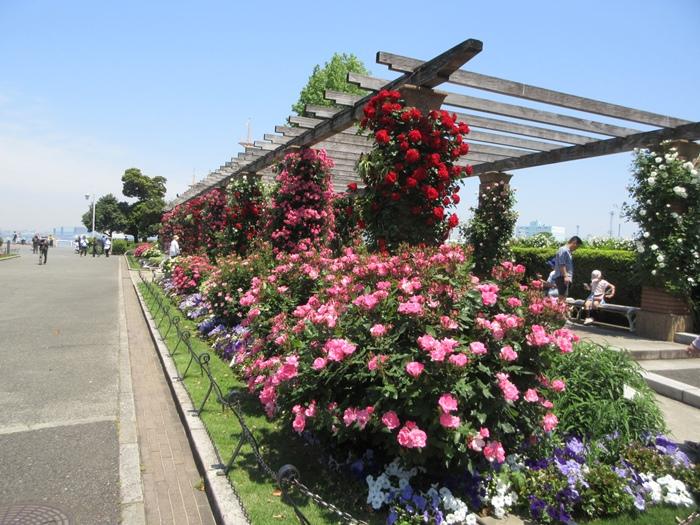 【モントレ横浜にランチに行ったら目の前でトライアスロンをやっていた】_b0009849_2145147.jpg