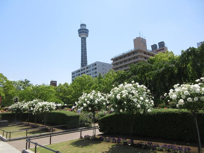 【モントレ横浜にランチに行ったら目の前でトライアスロンをやっていた】_b0009849_2146597.jpg