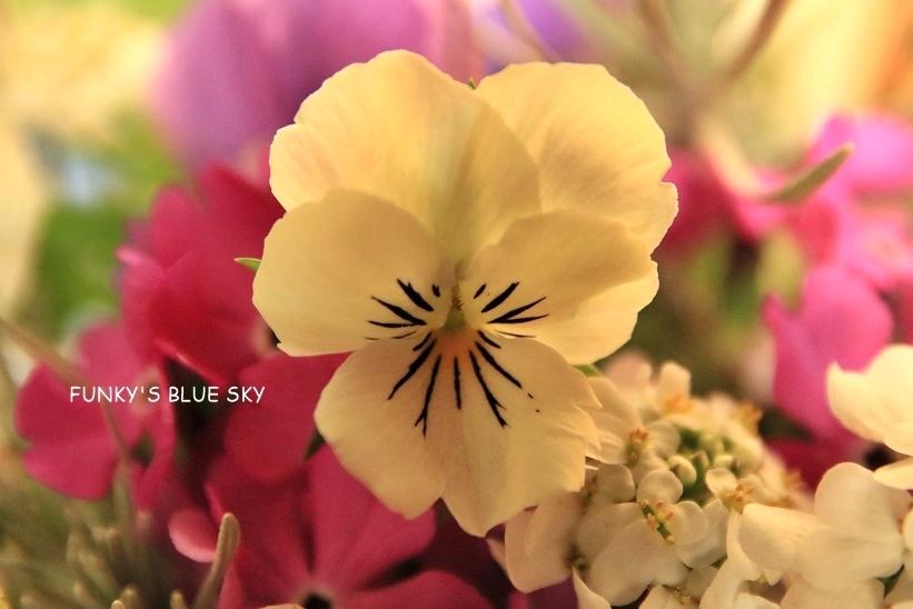 庭の小さなブーケ** (4月23日・28日)_c0145250_09421372.jpg