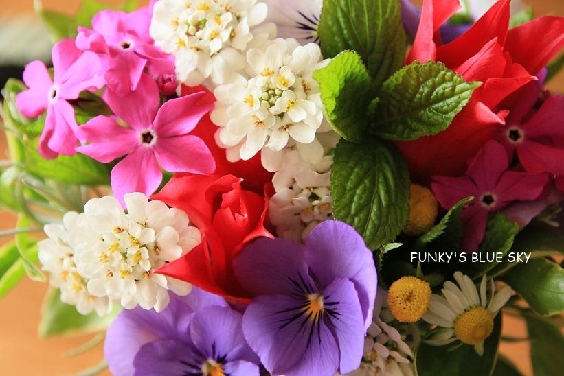 庭の小さなブーケ** (4月23日・28日)_c0145250_09424359.jpg