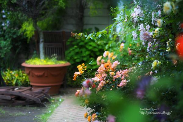 Rose garden_e0268051_15250316.jpg