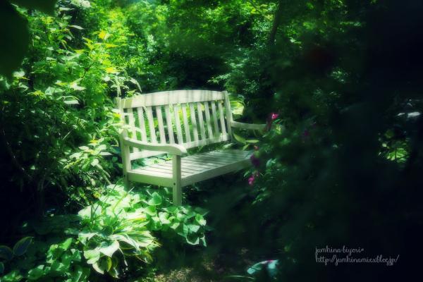Rose garden_e0268051_15251838.jpg