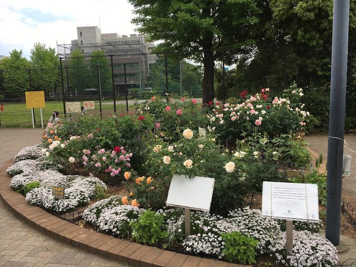 2019/5駒場野公園バラ花壇_a0094959_02510021.jpg