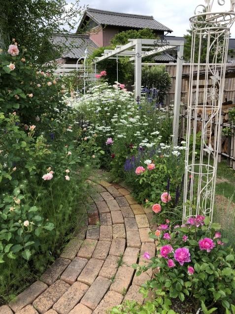 ガゼボを囲うバラや草花たち_a0243064_08544347.jpg