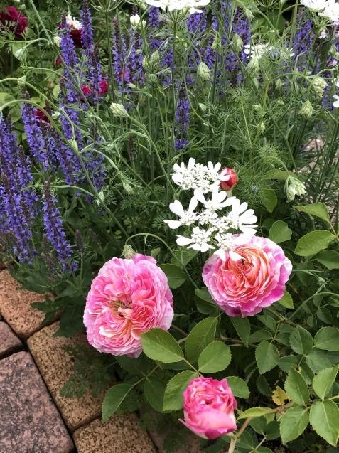 ガゼボを囲うバラや草花たち_a0243064_09063708.jpg