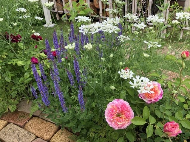 ガゼボを囲うバラや草花たち_a0243064_09085141.jpg