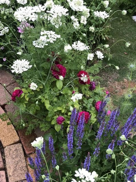 ガゼボを囲うバラや草花たち_a0243064_09095733.jpg