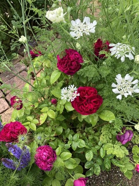 ガゼボを囲うバラや草花たち_a0243064_09142088.jpg