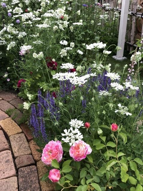 ガゼボを囲うバラや草花たち_a0243064_09151982.jpg
