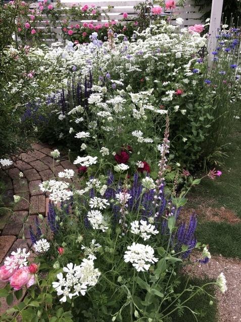 ガゼボを囲うバラや草花たち_a0243064_09160856.jpg