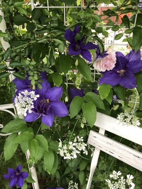 ガゼボを囲うバラや草花たち_a0243064_09213727.jpg