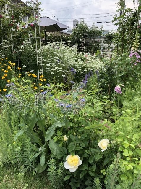 ガゼボを囲うバラや草花たち_a0243064_09292622.jpg