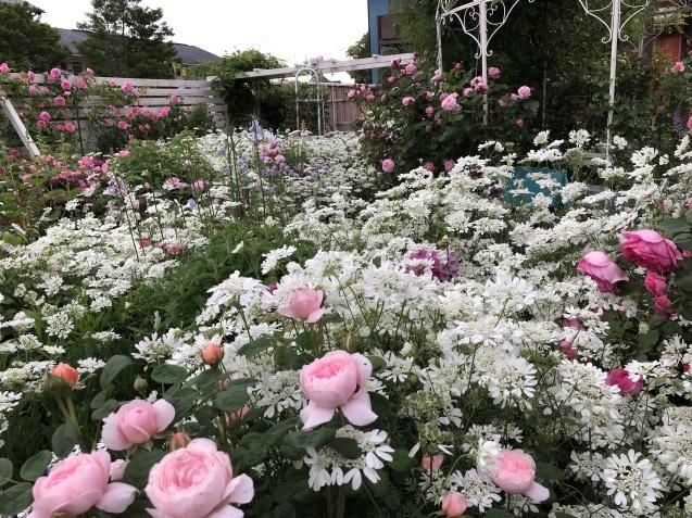 ガゼボを囲うバラや草花たち_a0243064_09385695.jpg