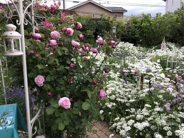 ガゼボを囲うバラや草花たち_a0243064_09422335.jpg