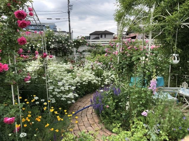 ガゼボを囲うバラや草花たち_a0243064_09433953.jpg