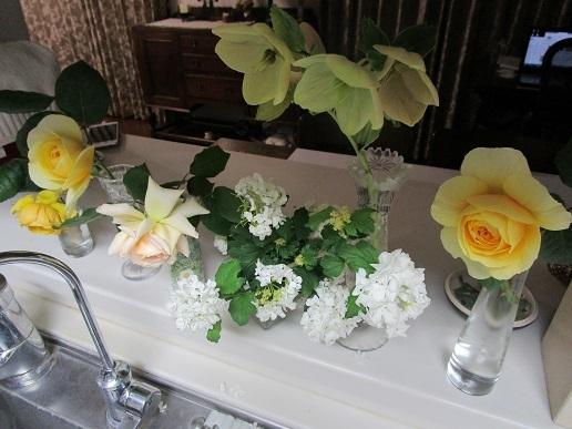 花いろいろ_d0006467_17281306.jpg