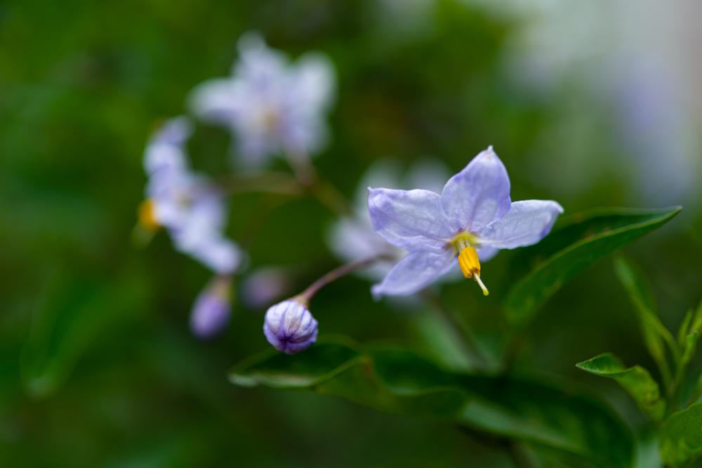 花を探しながら_a0261169_12161356.jpg