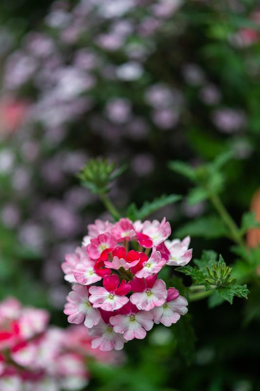 花を探しながら_a0261169_12200265.jpg