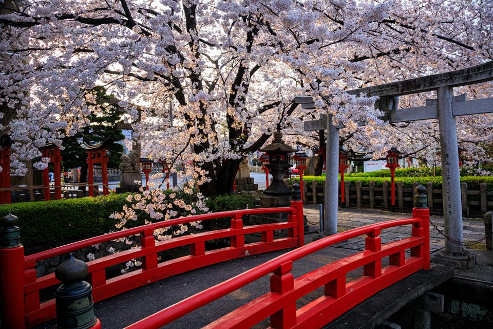 桜 2019!  ~六孫王神社~_b0128581_18435246.jpg