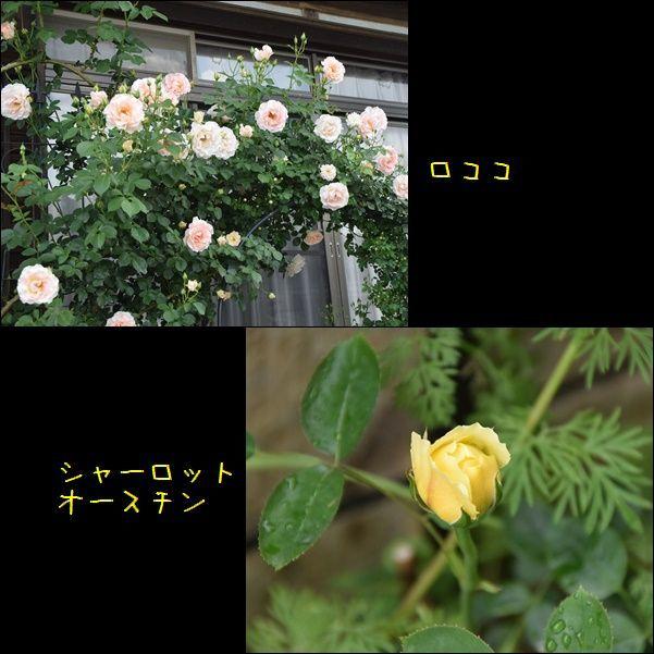 e0234881_21200327.jpg