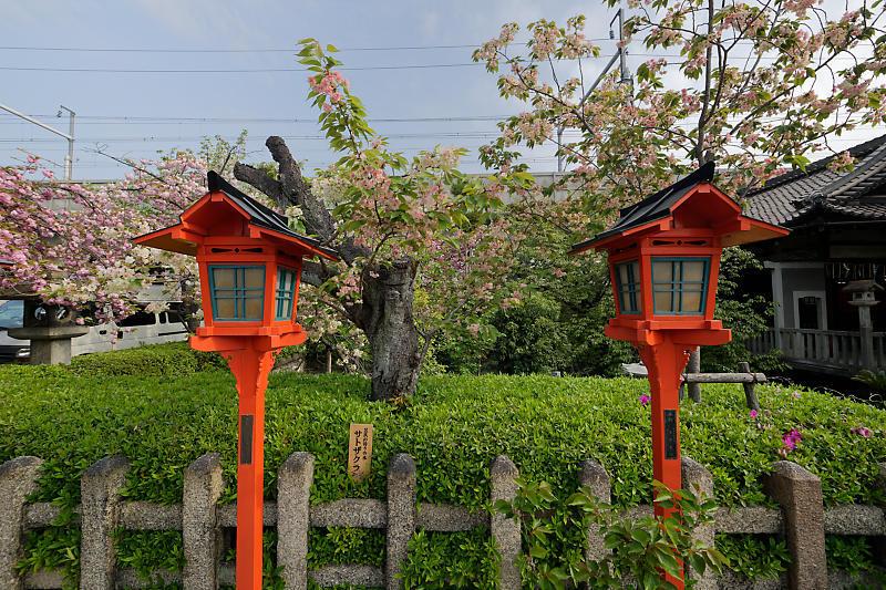桜巡り2019@六孫王神社_f0032011_19080001.jpg