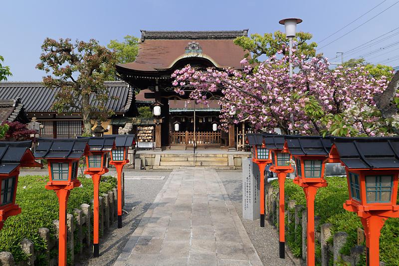 桜巡り2019@六孫王神社_f0032011_19080030.jpg