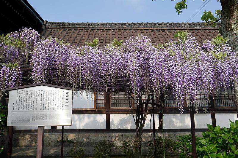桜巡り2019@六孫王神社_f0032011_19131278.jpg