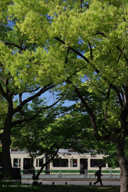 大通りの木陰で_d0309612_12311928.jpg